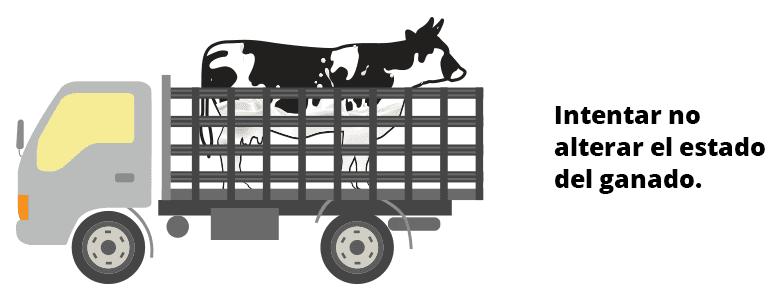 Transporte ganado vacuno